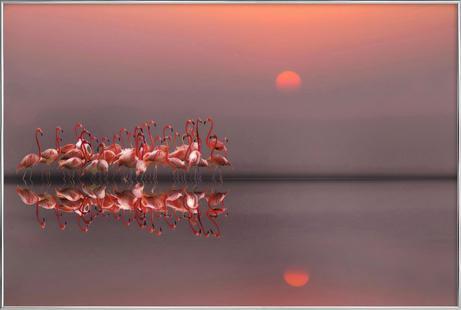 Purple Sunset - Anna Cseresnjes