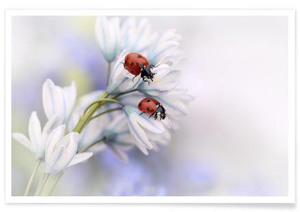 Ladybirds - Ellen van Deelen