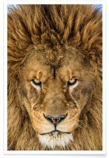 Serious Lion - Mike Centioli
