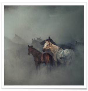 The Lost Horses - Hüseyin Taşkın