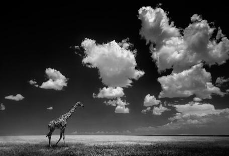 Gone With The Clouds - Alberto Ghizzi Panizza