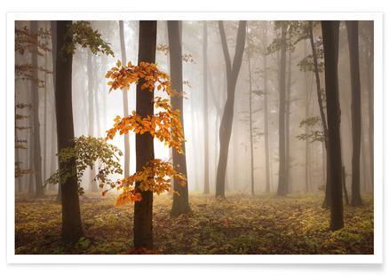In November Light - Nicolas Schumacher
