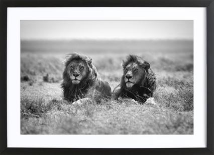 Two Kings - Nicolas Merino