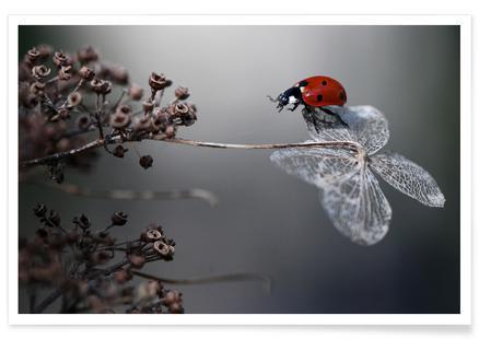 Ladybird on Hydrangea - Ellenvan Deelen