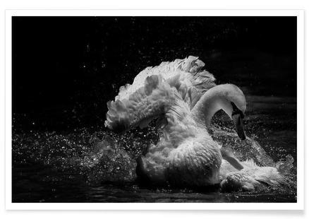 In Motion - C.S. Tjandra