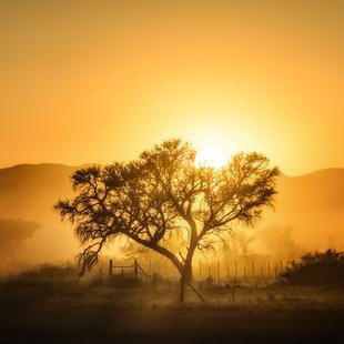 Golden Sunrise - Piet Flour