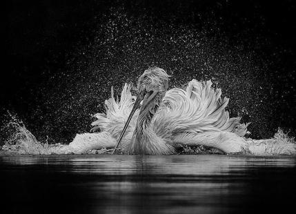 Dancer - C.S. Tjandra