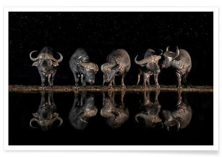 Buffaloes in the Waterhole at Night - Xavier Ortega