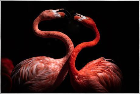 Flamingos - EijiItoyama
