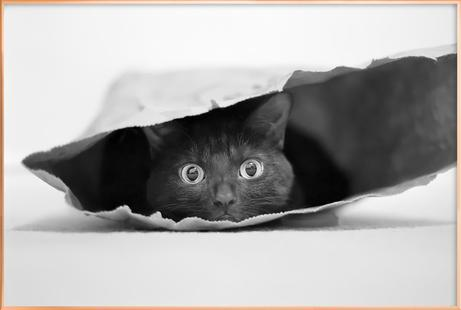 Cat In A Bag -Jeremy Holthuysen