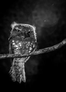 Alone In The Night - Wilianto