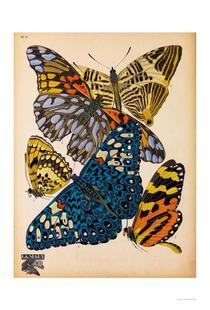 Butterflies Plate 11, E.A. Seguy