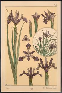 Eugene Grasset - Iris 01