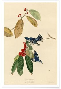 Azure Warbler