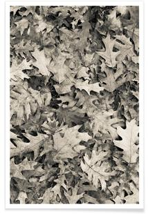Autumn Foliis