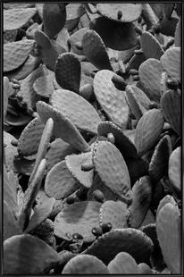 Prickly Cacti