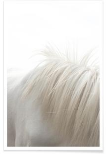 Horses Mane