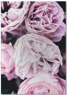 Pink flowers II