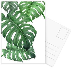 Tropical No.2