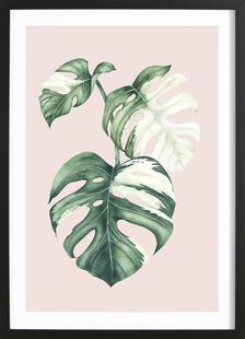 Tropical No. 4