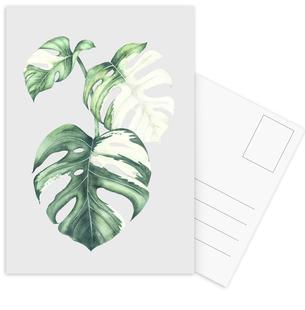 Tropical No. 5