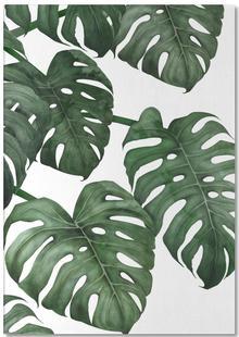 Tropical No. 6