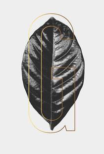Plants G