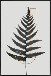 Plants J