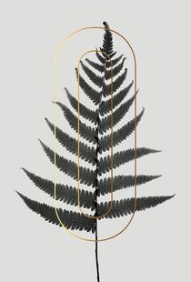 Plants O