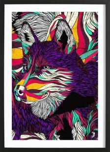 Color Husky