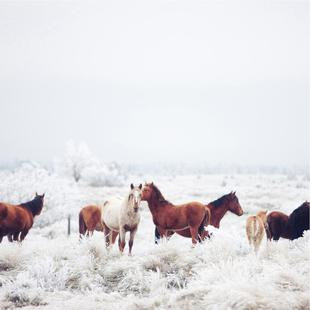 Winter Horseland