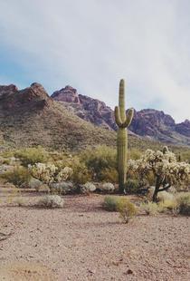 Arizona Cactus