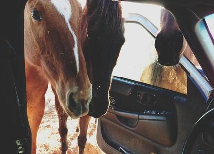 Car Horses