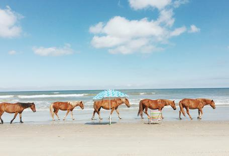 Horses on Holiday