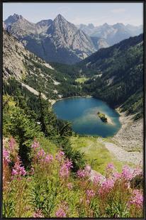 Cascade Summer Wildflowers