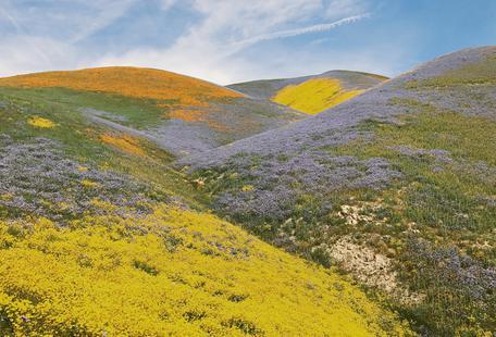 California in Bloom
