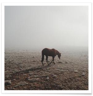 Fogged Horse