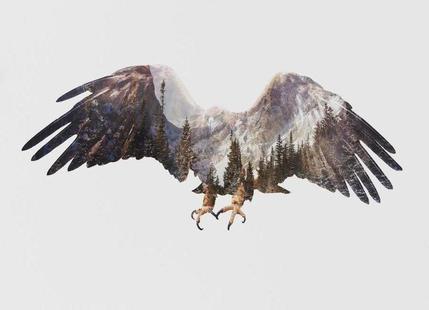 Artic Eagle