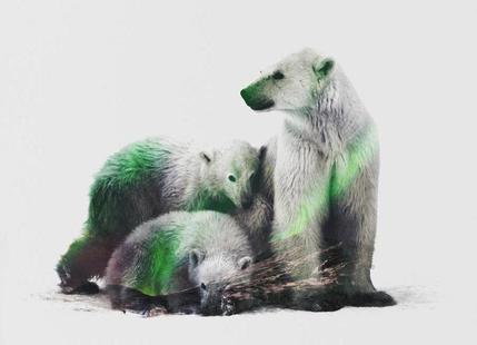 Artic Polar Bear Family