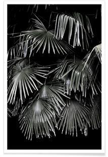Tropical Garden 5/5