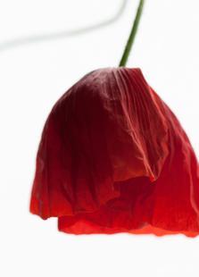 Poppy Seed Dress