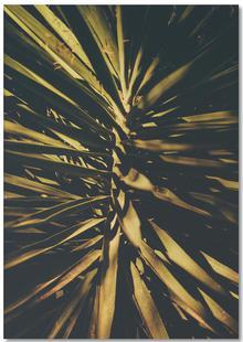 The Palm II