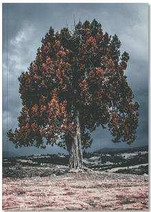 The Red Giant Tree