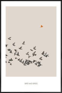 Bird And Birds