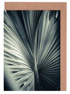 Palms-1847