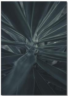 Palms-1869