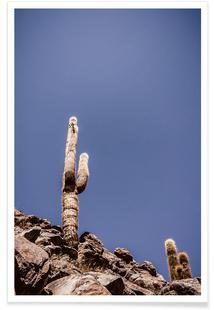 Atacama Cacti Family 2