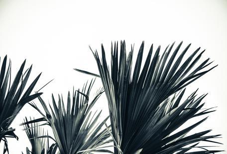 Palm Shade 3