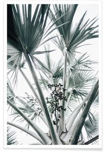 Beach Palm Fruits