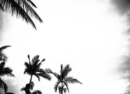 Palm Shade 4